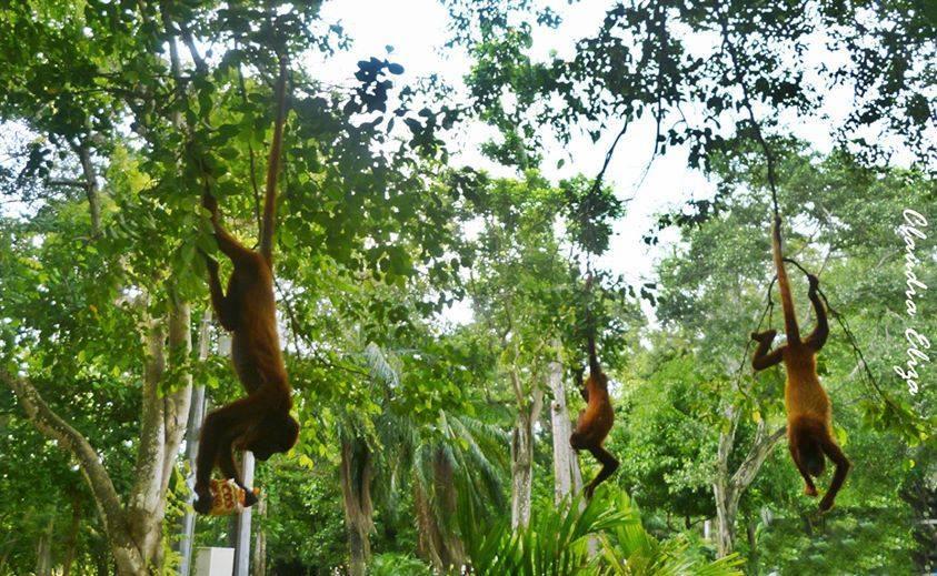 micos en la avenida primera