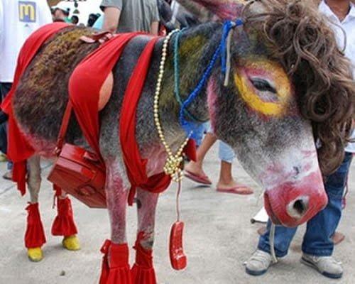 Festival Nacional del burro