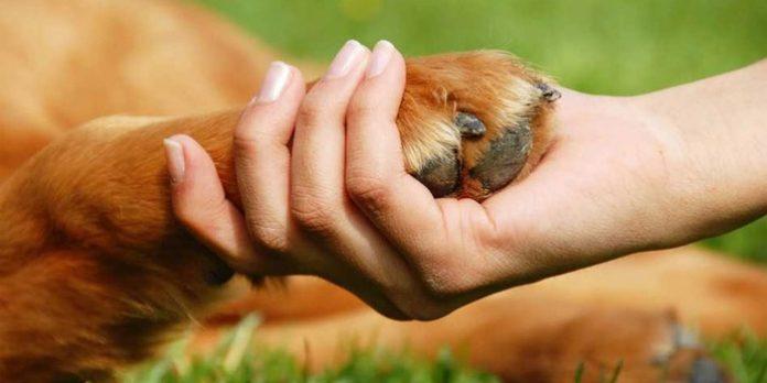 política pública de protección y bienestar, Forma parte de la construcción de la política pública de protección y bienestar animal municipal, La Guía de Montería