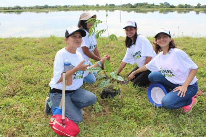 siembra de árboles, Montería tiene código ambiental para la siembra de árboles, La Guía de Montería