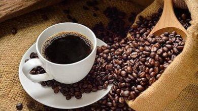 El costoso café que proviene del excremento