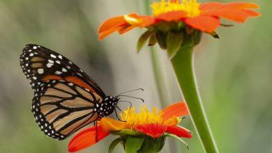 Exposición ¡Que vivan las mariposas! en Montería