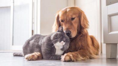 Perros y gatos no se contagian ni pueden transmitir el Covid19