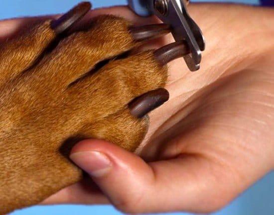 Cómo cortar las uñas de las mascotas