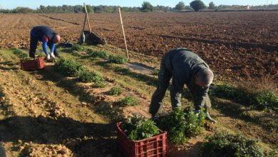 Recomendaciones que deben seguir los trabajadores del sector rural