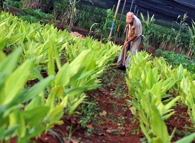 En Córdoba impulsarán proyectos de emprendimiento agrícola