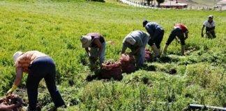 MinAgricultura amplia inscripciones para otorgar incentivo económico