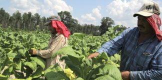 Córdoba presente en las jornadas de negocio virtual de MinAgricultura