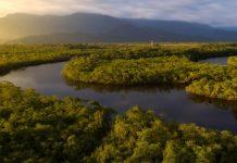 Hoy gran concierto para proteger el Amazonas