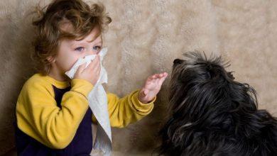5 razas de perros para personas alérgicas