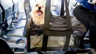 En Colombia estos son los requisitos para viajar con su mascota
