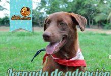 Jornada de adopción en Montería, 'Patitas al rescate'