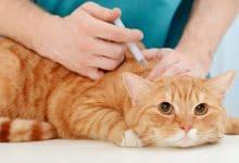 Rusia aprueba primera vacuna contra el covid19 para animales
