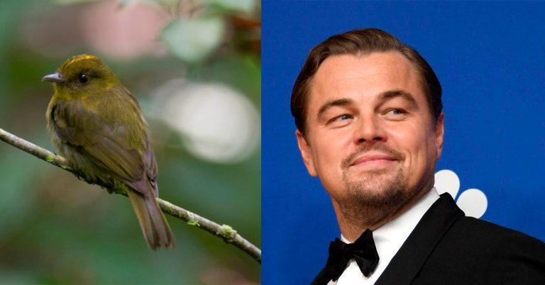 Leonardo DiCaprio destacó el hallazgo de 30 nuevas especies de aves en Córdoba